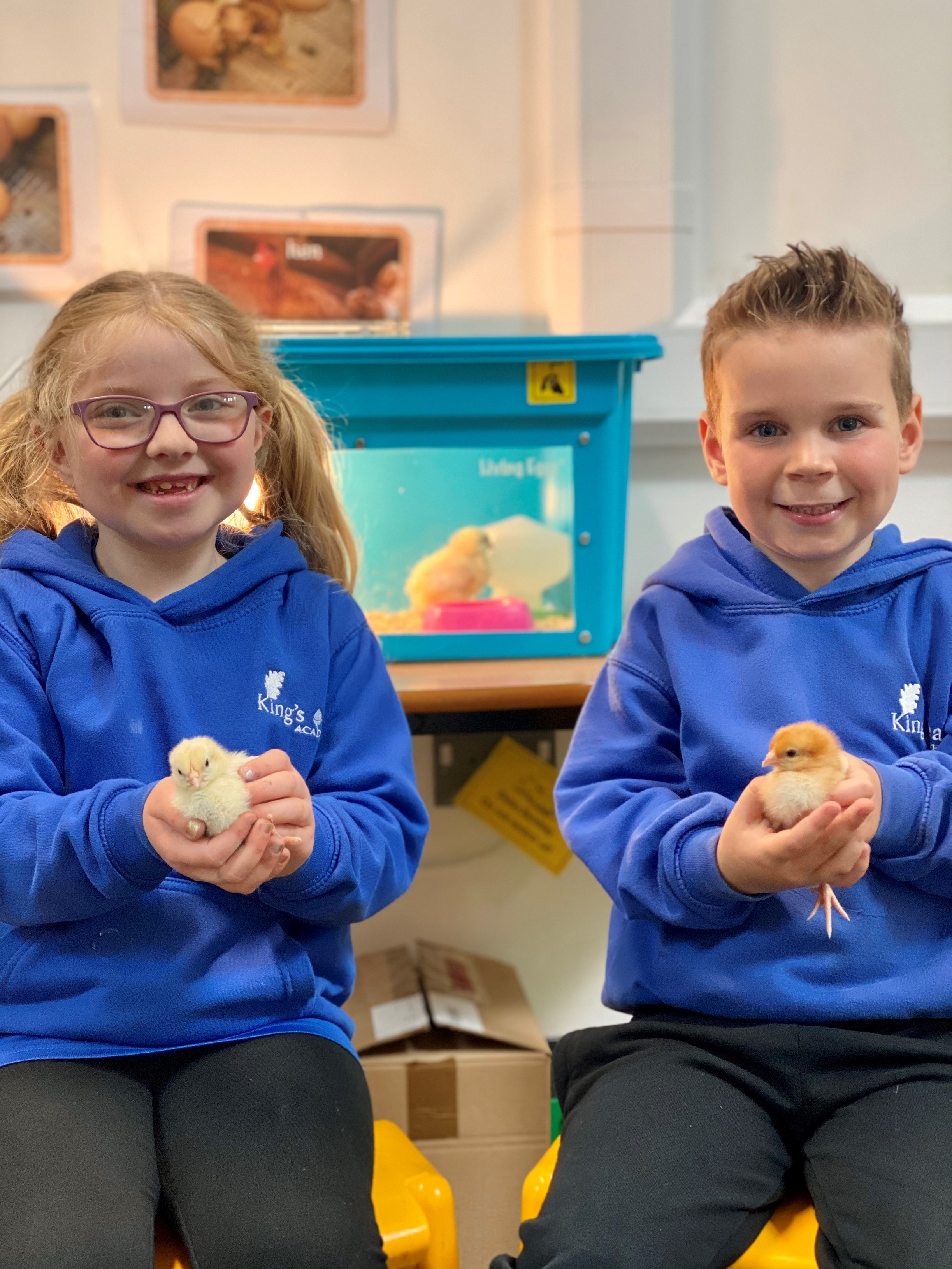 Looking after chicks is a great way to learn science!