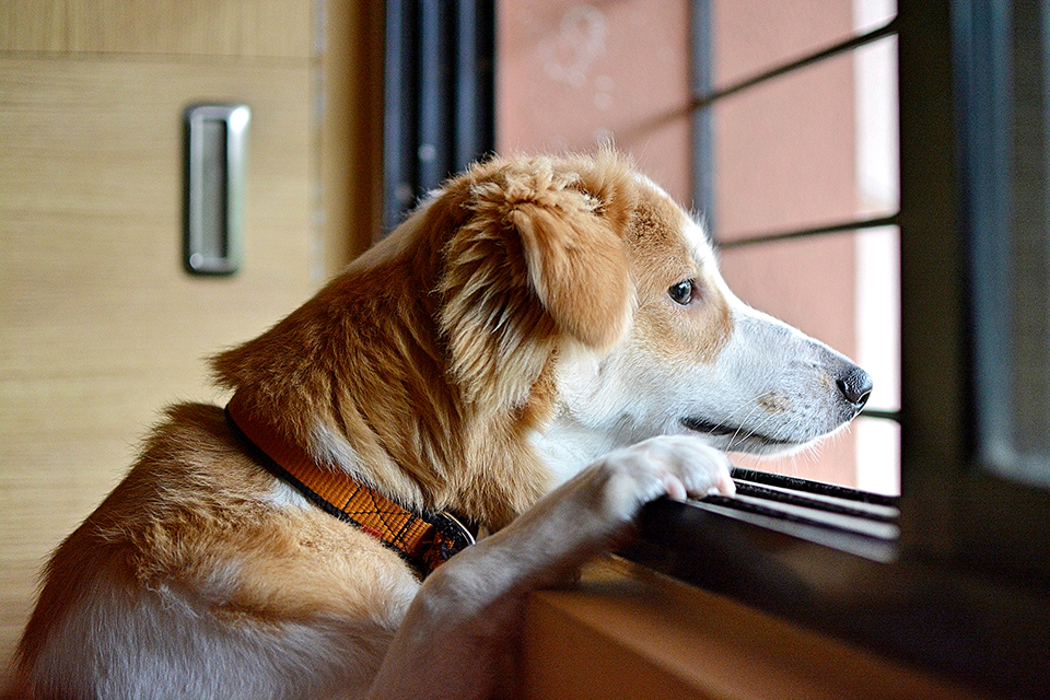 Managing your pets' separation anxiety